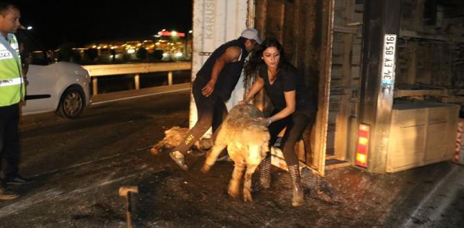 Hayvanları kurtarmak için seferber oldular