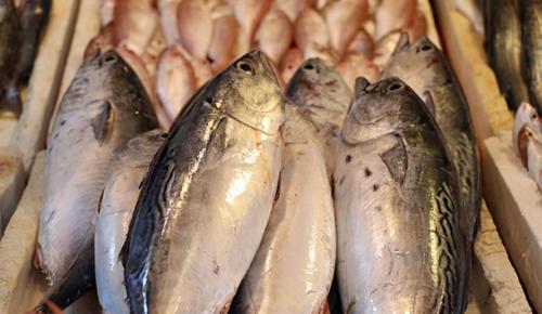 Havalar soğudu, balık fiyatları iki kat arttı