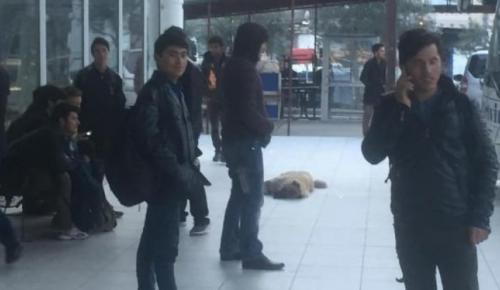 Kaçakları İstanbul diye Artvin'de bıraktılar