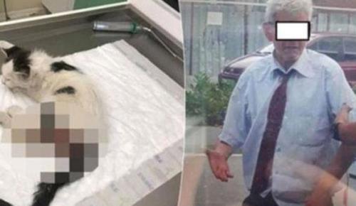 Yavru kediye tecavüzle suçlanan şüpheli tutuklandı
